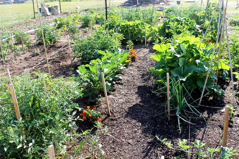 God\'s Community Garden - Kansas Community Gardens